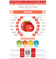food infographics poster tomato vegetable vector image