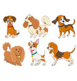 set of cartoon dogs of various breeds on white vector image