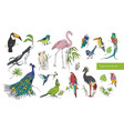 realistic hand drawn colorful collection of vector image