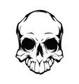 contour skull pattern on white background vector image vector image