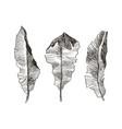 hand drawn banana leaves of tropical plants vector image
