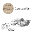 Hand Drawn cucumber Monochrome sketch vector image vector image