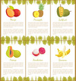 mango and pineapple and banana posters vector image