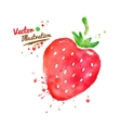 Watercolor strawberry vector image vector image