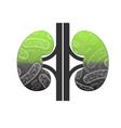 bad human kidneys vector image vector image