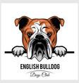 english bulldog - peeking dogs - breed face head vector image vector image