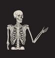 human skeleton posing over black background vector image vector image