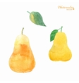fruits pears vector image