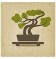 bonsai old background vector image
