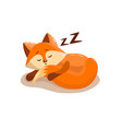 cute fox sleeping vector image vector image