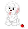 cute white lap-dog puppy posing vector image vector image