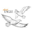 freehand sketch of flying eagle vector image vector image