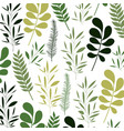 pattern leaves of plants on colorful silhouette in vector image vector image