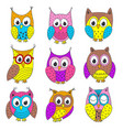 set of isolated funny owls in color vector image