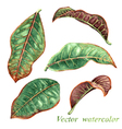 Tropic leaves set vector image vector image