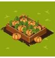Vegetable Garden Box with Pumpkin Set 8 vector image vector image