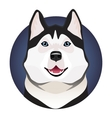 Adorable black and white with blue eyes Husky vector image vector image