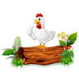 cute hen posing on tree trunk vector image vector image
