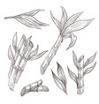 bamboo logs with leaves hand drawn sketch vector image vector image