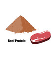 beef protein powder and piece of meat vector image