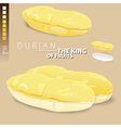 Durian is meaning of the king of Thai fruits vector image vector image