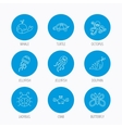 Octopus turtle and dolphin icons Jellyfish vector image vector image