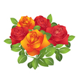 red and orange beautiful flowers - roses vector image