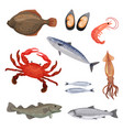set of various seafood fish crab and mollusks vector image