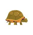 turtle cartoon icon vector image