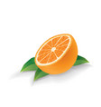 orange with leaves isolated on white vector image