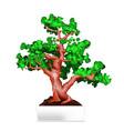 bonsai in white pot vector image