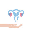 isolated of uterus vector image