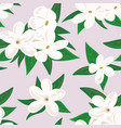 white jasmine flower branch of jasmine flowers vector image vector image