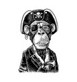 monkey pirate with gun dressed in a cocked hat vector image vector image