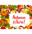 autumn season poster with fall leaf and pumpkin vector image vector image