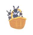 bunnies basket easter vector image