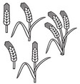 wheat ear thin line icon set vector image vector image