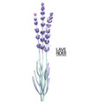 watercolor lavender bouquet vector image vector image