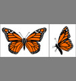 front and side view colourful monarch butterfly vector image vector image