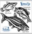 largemouth bass lake trout and nile perch fishing vector image vector image