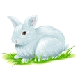 White easter bunny sitting on green grass vector image
