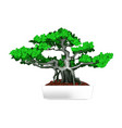 bonsai in white pot vector image vector image
