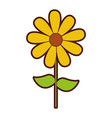 cute sunflower garden isolated icon vector image vector image