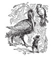 giant birds vintage vector image vector image