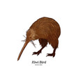 kiwi bird hand draw sketch vector image