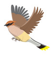 waxwing isolated on a white background graphics vector image vector image
