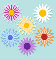 set color daisy chamomile cute flower plant vector image vector image
