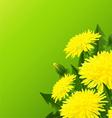 Yellow dandelion flower vector image