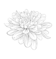 black and white dahlia flower isolated on white vector image vector image