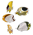 Butterflies fishes vector image vector image